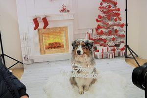 still_hundweihnachten